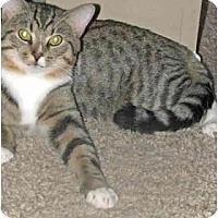 Adopt A Pet :: Jeffrey - Xenia, OH