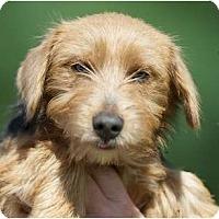 Adopt A Pet :: Charisse - Providence, RI