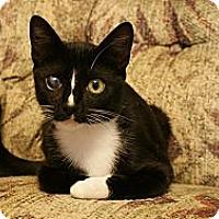 Adopt A Pet :: Wechsler - St. Louis, MO