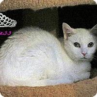Adopt A Pet :: Princess - sponsor only - Sherman Oaks, CA