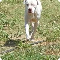 Adopt A Pet :: Jett - Georgetow, TX