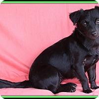 Adopt A Pet :: Morticia - Edmonton, AB