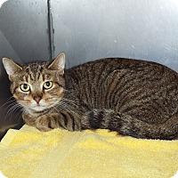 Adopt A Pet :: Jessica - Shelby, MI