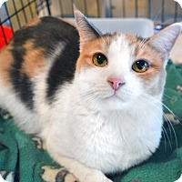 Adopt A Pet :: Chelsea - Johnson City, TN