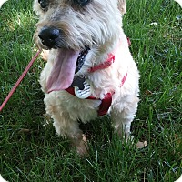 Adopt A Pet :: Maddie - Wilmington, DE