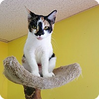 "Adopt A Pet :: ""  Sissy "" - Scottsburg, IN"