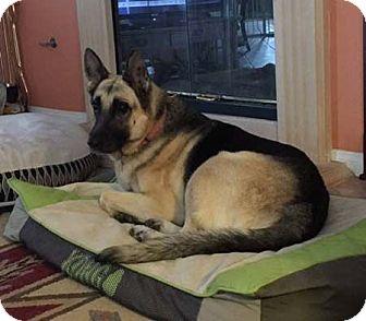German Shepherd Dog Dog for adoption in Downey, California - Duchess