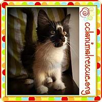 Adopt A Pet :: Rose - Panama City, FL
