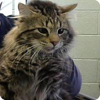 Adopt A Pet :: Percy - Decatur, GA