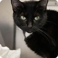 Adopt A Pet :: Midnight - Martinsville, IN