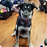 Adopt A Pet :: Korra - Duchess, AB