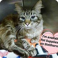 Adopt A Pet :: TEDDY - Fort Wayne, IN