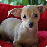 Adopt A Pet :: Cranberry - Yuba City, CA