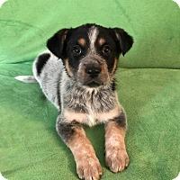 Adopt A Pet :: Carrie Ann (ADOPTION PENDING) - Trenton, NJ