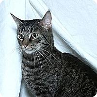 Adopt A Pet :: Marco Polo - Sacramento, CA
