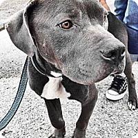 Adopt A Pet :: Achilles - Owasso, OK