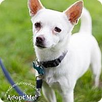 Adopt A Pet :: Jaime - San Francisco, CA