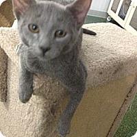 Adopt A Pet :: Cerbi - Chandler, AZ