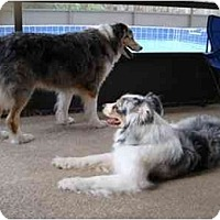 Adopt A Pet :: Molly & Sydney - Orlando, FL