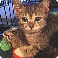 Adopt A Pet :: Bianchi - Brooklyn, NY