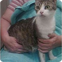 Adopt A Pet :: Lucky - Reston, VA