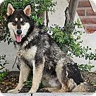 Adopt A Pet :: Kirby von Koenig
