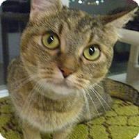 Adopt A Pet :: Debra - Hamburg, NY