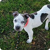 Adopt A Pet :: Hermes - San Diego, CA