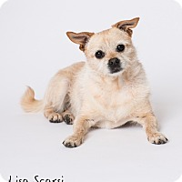 Adopt A Pet :: Bess - Los Angeles, CA