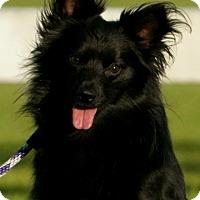 Adopt A Pet :: BANDITO - Mahopac, NY