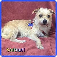 Adopt A Pet :: Samuel - Hollywood, FL