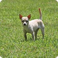 Adopt A Pet :: Mirabell - Lufkin, TX
