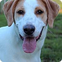 Adopt A Pet :: Zoe - Bedford, VA