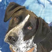 Adopt A Pet :: Beanie - Huntley, IL