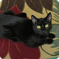 Adopt A Pet :: Rosie - Trevose, PA