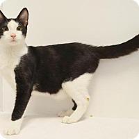 Adopt A Pet :: *SPARTAN - Sacramento, CA