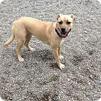 Adopt A Pet :: Tera - Auburn, WA