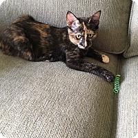 Adopt A Pet :: Rebecca - Middleton, WI