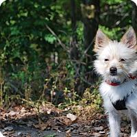 Adopt A Pet :: Atom - New Castle, PA
