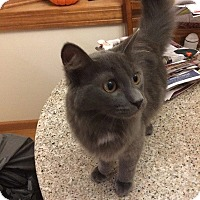 Adopt A Pet :: Nigel - Cleveland, OH