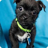 Adopt A Pet :: Rudy - Minneapolis, MN
