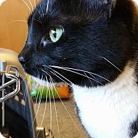 Adopt A Pet :: Sissy - Burlington, NC