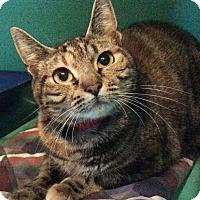 Adopt A Pet :: Saturn - Breinigsville, PA