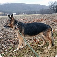 Adopt A Pet :: Lucca - New Ringgold, PA