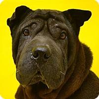 Adopt A Pet :: Sephora - Houston, TX