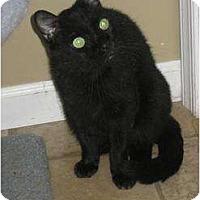 Adopt A Pet :: Bijou - Bloomsburg, PA