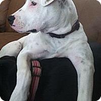 Adopt A Pet :: Maya (courtesy Listing) - Mission Viejo, CA