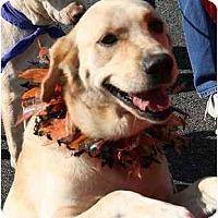 Adopt A Pet :: Petunia - Cumming, GA