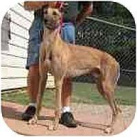 Adopt A Pet :: Calvin - Oak Ridge, NC