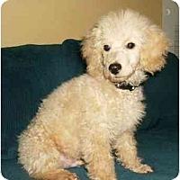 Adopt A Pet :: Elwood - Mooy, AL